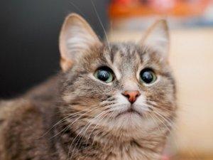Фото: Безпритульні котики та собачки Полтави шукають дім