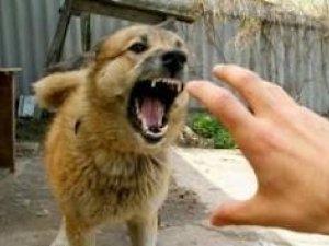 Фото: Покусана скаженою собакою полтавка: «Після мене вона вкусила жінку, а потім звалила велосипедиста»