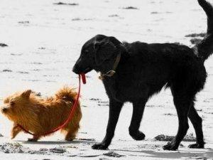 Нове опитування: Які нововведення необхідні щодо домашніх та безпритульних тварин?