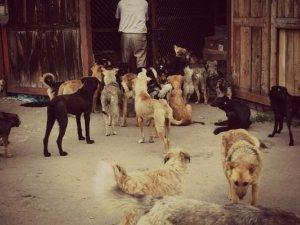 Фото: У Полтаві притулок для тварин збудують, але пізніше і за межами міста
