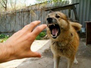 Фото: У Полтаві паніка через сказ вщухла – про рудого пса не згадують