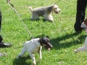 Фото: У Полтаві ідею облаштувати майданчики для тренування собак вважають соціально небезпечною