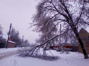 Фото: У Полтаві позбуватимуться аварійних дерев і вимикатимуть світло: графік