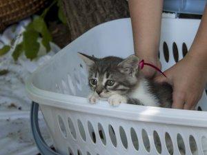 Фото: Як полтавці влаштовували бездомних тварин у родини (фотоогляд)