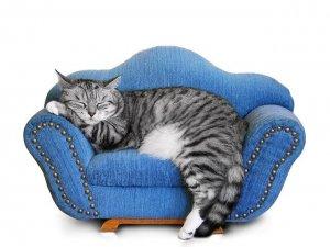 Фото: На що звернути увагу при виборі м'яких меблів: поради