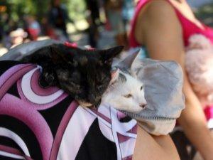 Фото: У Полтаві роздавали безпритульних собак та котів (+фото)