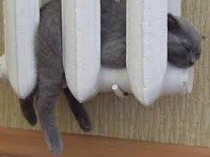 Фото: Як зігріваєтесь в холодну пору? (опитування)