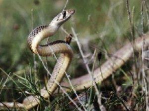 Фото: Сьогодні не варто йди по гриби – у лісі змії ховаються під землю