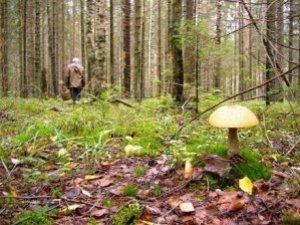 Фото: На Полтавщині дівчинка пішла по гриби й заблукала