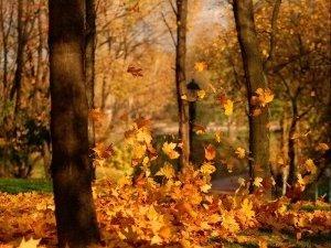 Фото: Про зиму можна дізнатися за листопадом та інеєм
