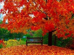 Фото: Фотоконкурс: останнє золото осені