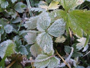 Фото: Ранковий морозець 29 жовтня вважається цілющим