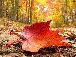 Фото: Про подальшу погоду розповість листя на деревах
