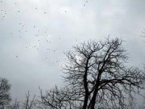 Фото: Погода в місті на 12 листопада