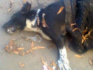 Фото: У Полтаві продовжують жорстоко вбивати тварин (фото)