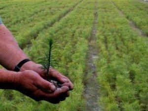 Фото: Цьогоріч на Полтавщині лісів насаджають менше, ніж торік