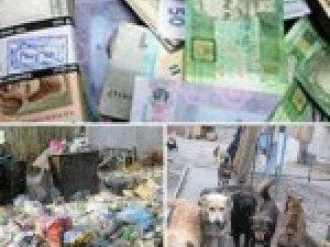 Фото: На сміття, звалища та безпритульних собак у Полтаві виділили 5 мільйонів