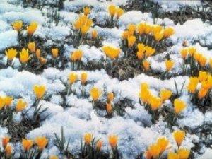 Фото: Синоптики розповіли про погоду в березні