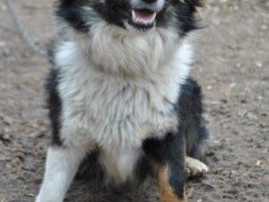 Фото: У Полтаві загубився пес, а бездомні тварини - шукають господарів