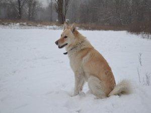 У Полтаві загубився пес, а бездомні тварини - шукають господарів