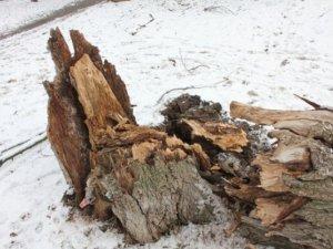 Фото: На дитячому майданчику в Полтаві впало дерево