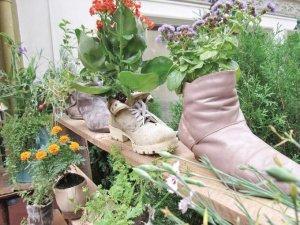 Фото: Клумбові ідеї: квіти у черевичках