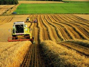 Фото: Рентабельність агропромислового сектору знизилася через ріст цін на пальне