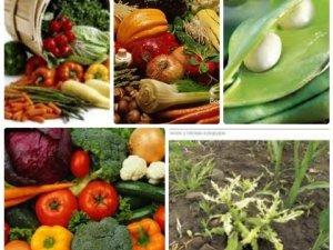 Фото: Сумісність рослин на городі та рослини-захисники