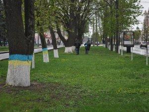 У Полтаві створили алею жовто-блакитних дерев