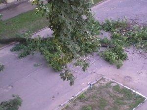 Фото: У Полтаві впало дерево та перегородило дорогу. Фото