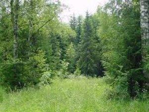 Фото: На Полтавщині заблукали велосипедисти – провели в лісі півночі
