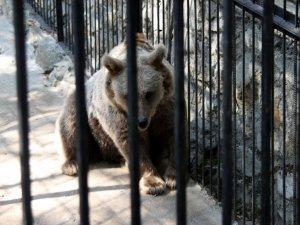 Фото: На Полтавщині ведмідь відкусив дитині руку