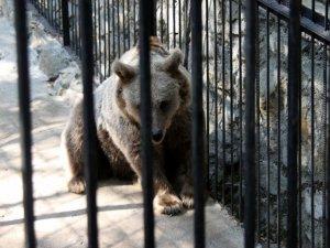 Фото: Дівчинка, якій ведмідь відкусив руку, була з меншою сестрою на роботі у батька
