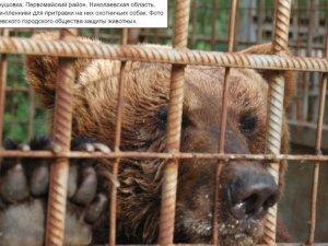 Фото: Ведмедя, який під Полтавою відкусив руку дитині, тримають для натравлювання мисливських собак