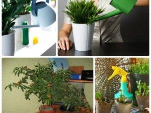 Фото: Як доглядати за кімнатними рослинами влітку