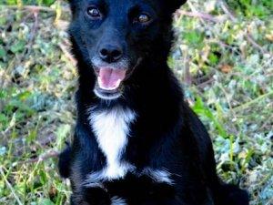 Фото: У Полтаві безпритульні тварини шукають господарів (фото)