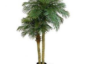Фото: Доглядаємо за кімнатними пальмами