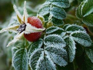 Фото: У Полтаві та області очікуються заморозки