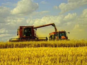 Фото: Полтавщина намолотила понад 3 мільйони тонн зерна