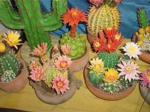 Фото: Як доглядати за кімнатними кактусами взимку