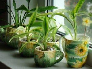 Фото: Як доглядати за кімнатними квітами взимку