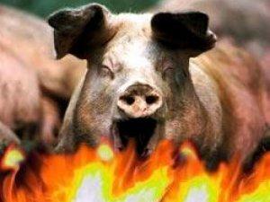 Фото: Пожежа на Полтавщині: в інкубаторі погоріли свині