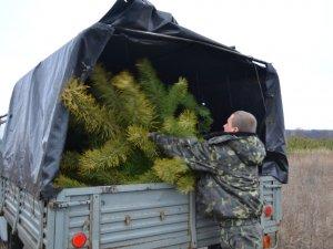 Фото: В Україні оштрафували 300 осіб, які незаконно зрубували ялинки в лісі