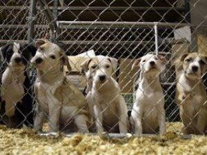 Фото: У Полтаві збудують притулок для тварин