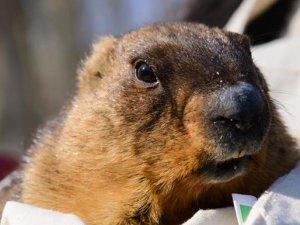 Фото: Бабак у Харкові навіщував весну через шість тижнів