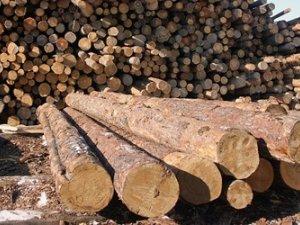 Фото: Полтавські даівці затримали автомобіль, яким перевозили деревину дуба без документів