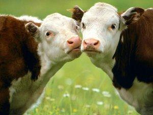 Фото: Битва за молоко: чому ціна зростає, а прибуток виробників падає