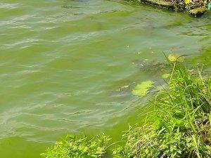 Фото: На Полтавщині у водоймі знайшли тіло міліціонера