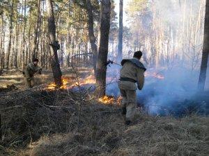 Фото: На Полтавщині ледь не згоріло 15 гектарів лісу