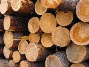 Фото: Кому належатимуть українські ліси